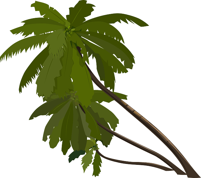 קידום אורגני עצי דקל